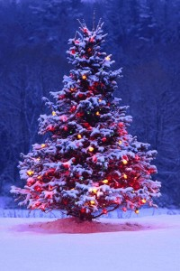 8c18b08946a4912ed439a2d60b298794--christmas-tree-with-lights-outdoor-christmas-trees